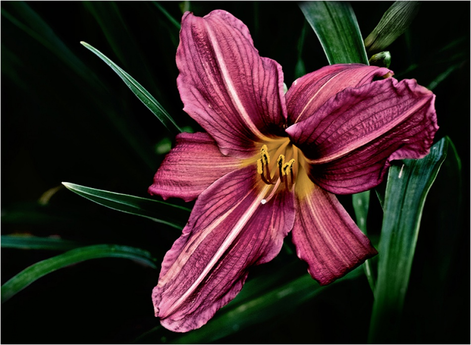 A piece of fine art art photography titled Lily by Tracy Martin