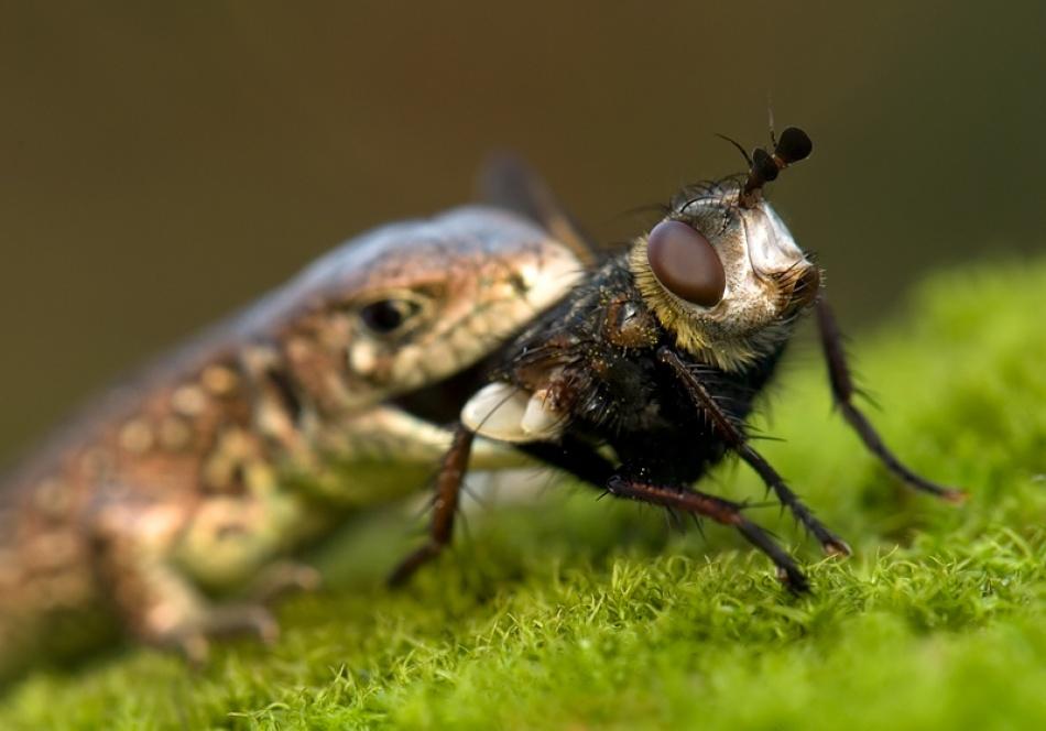 A piece of fine art art photography titled Fly by arachiusz