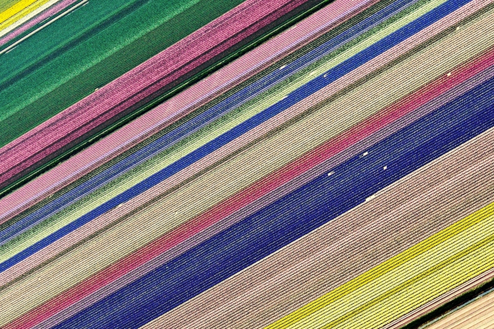 A piece of fine art art photography titled Flowers In Stripes by Luis Bonito