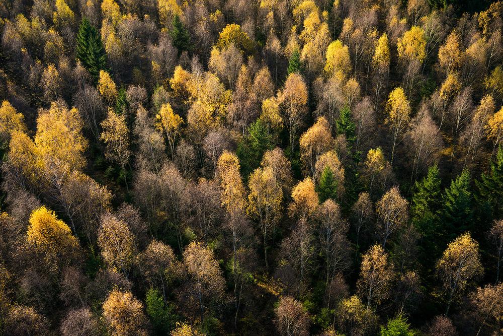A piece of fine art art photography titled Autumn Light by keller