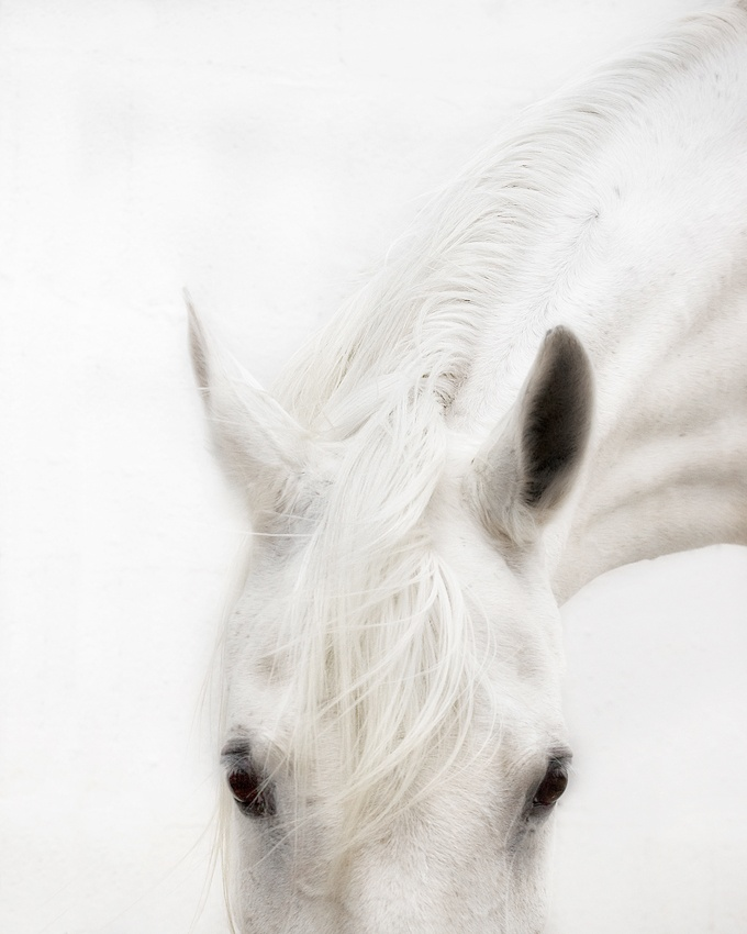 A piece of fine art art photography titled White Washed by Cristy Cumberworth