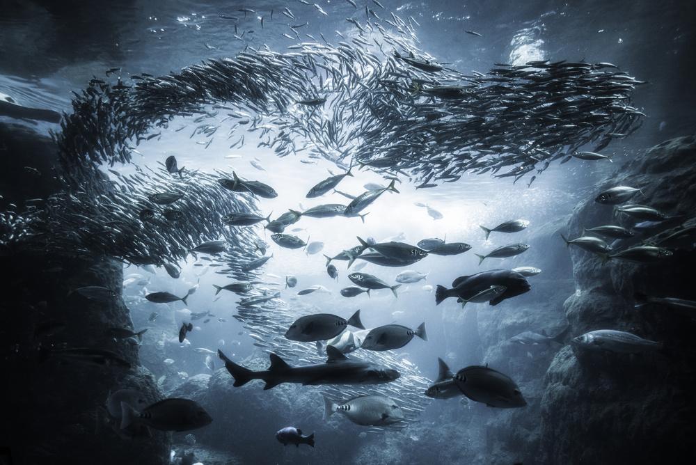 A piece of fine art art photography titled Underwater Exploration by Takashi Suzuki