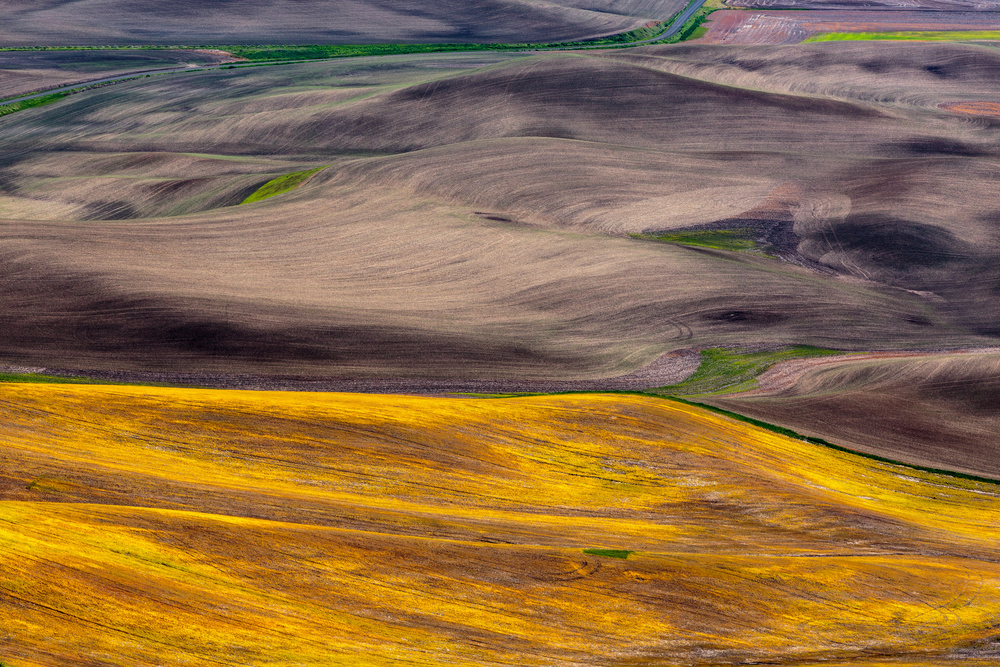 A piece of fine art art photography titled Palouse Gold by Francois Roughol