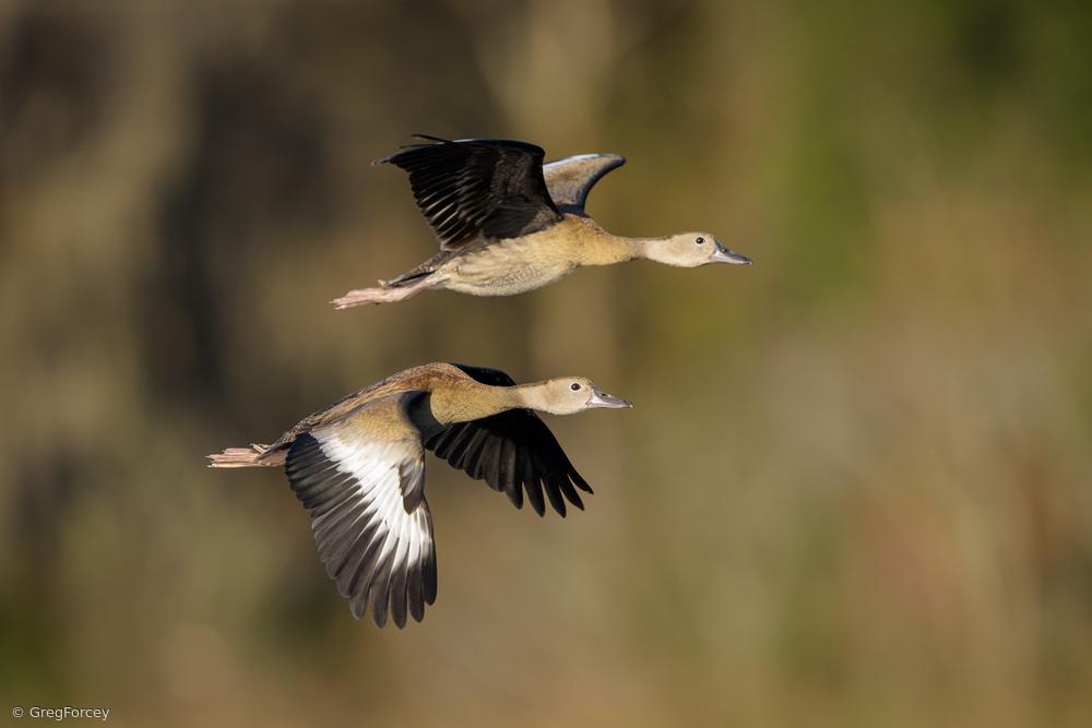 Fowl Flight