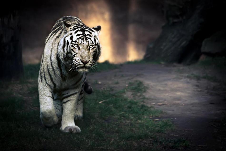 A piece of fine art art photography titled White Walker by Jesús González Vera