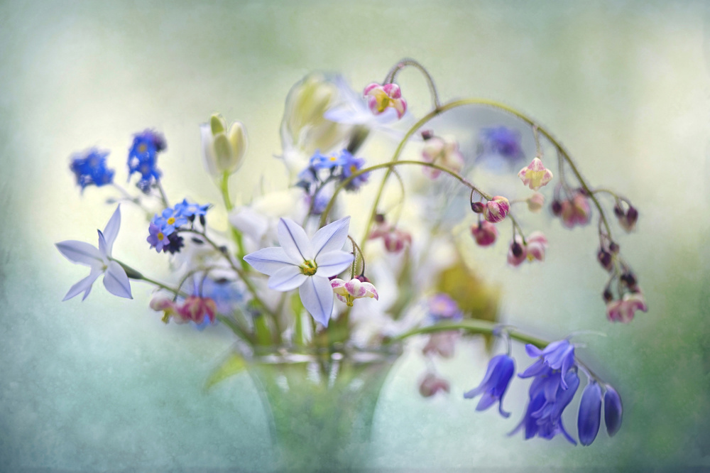 A piece of fine art art photography titled Spring Treasures by Jacky Parker