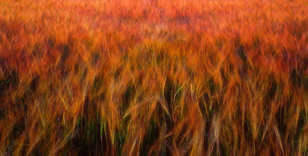 A piece of fine art art photography titled Fire Fields by Piotr Krol (Bax)