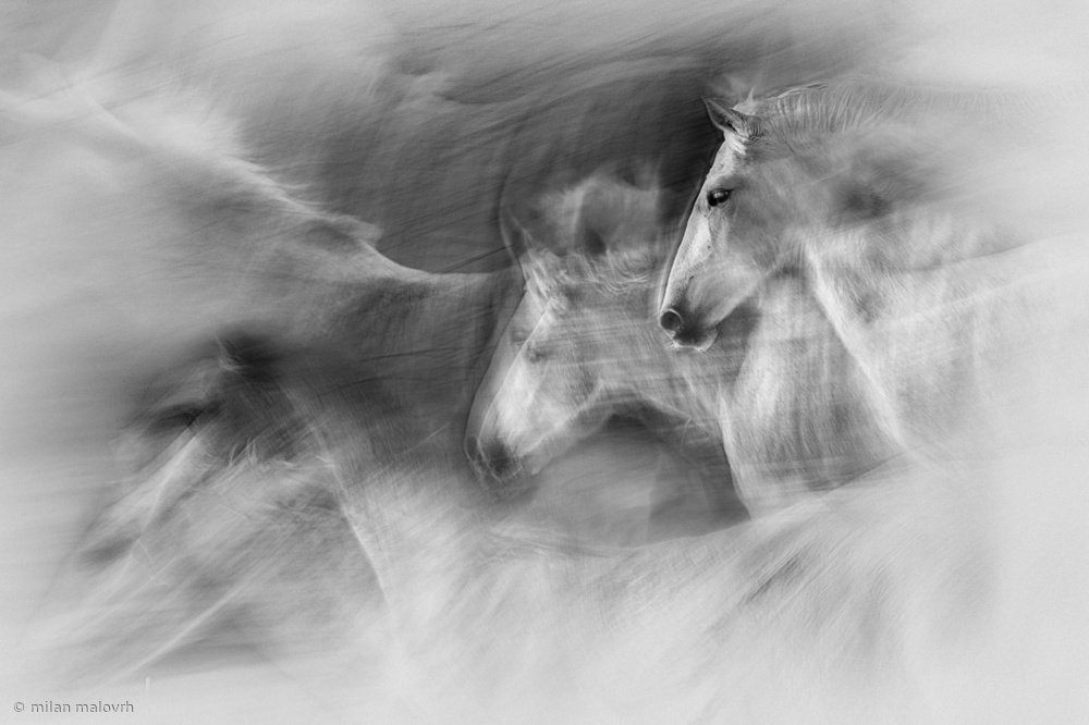 View this piece of fine art photography titled In motion by Carlos Gonzalez