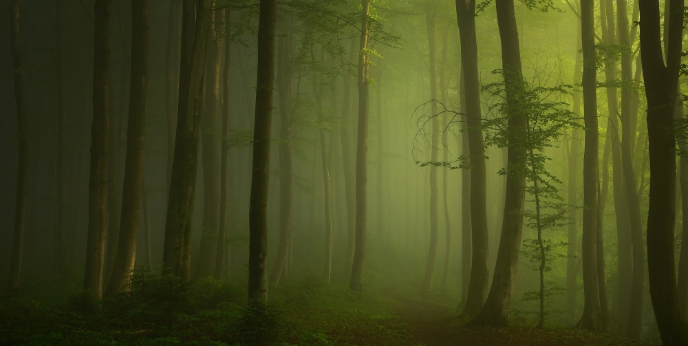 A piece of fine art art photography titled Awakening Forest by Norbert Maier
