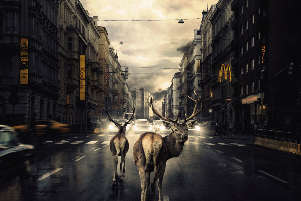 A piece of fine art art photography titled We Found Shelter by Martin Stranka