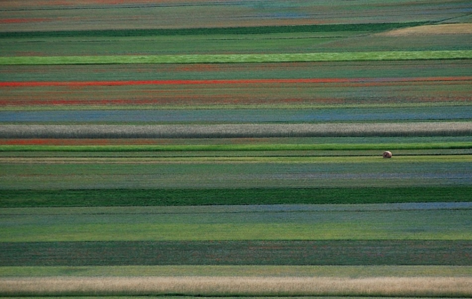 A piece of fine art art photography titled Rural Abstract by Riccardo Monaco