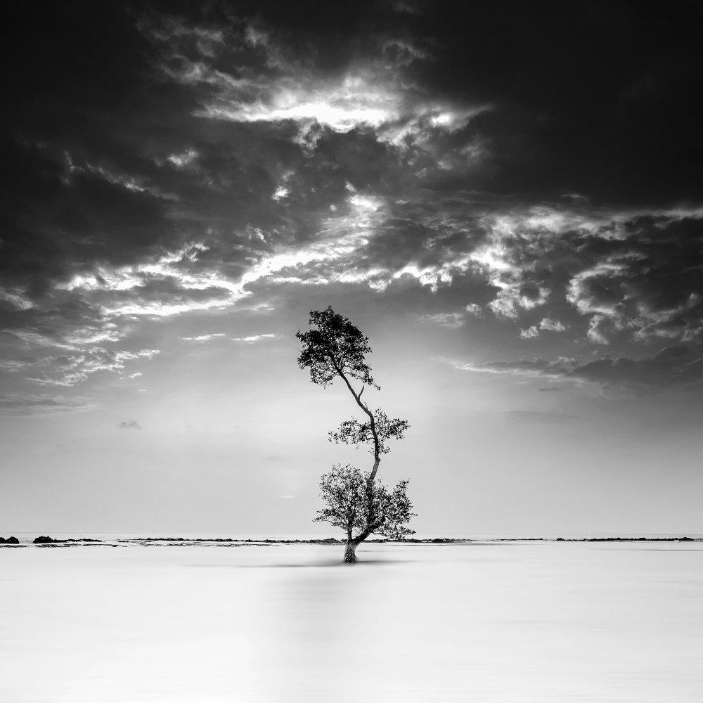 A piece of fine art art photography titled Strive by dedy