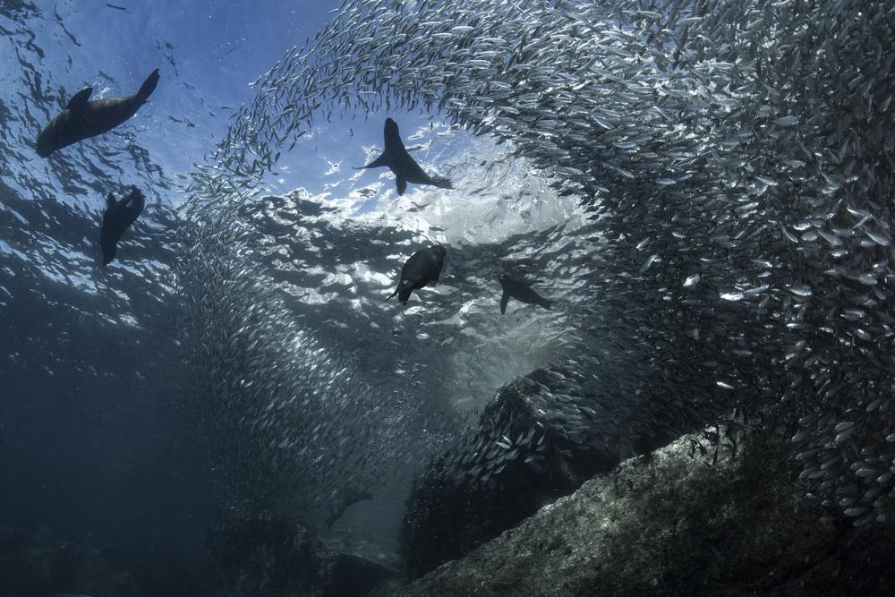 A piece of fine art art photography titled Sea Lion Paradise by reiko takahashi