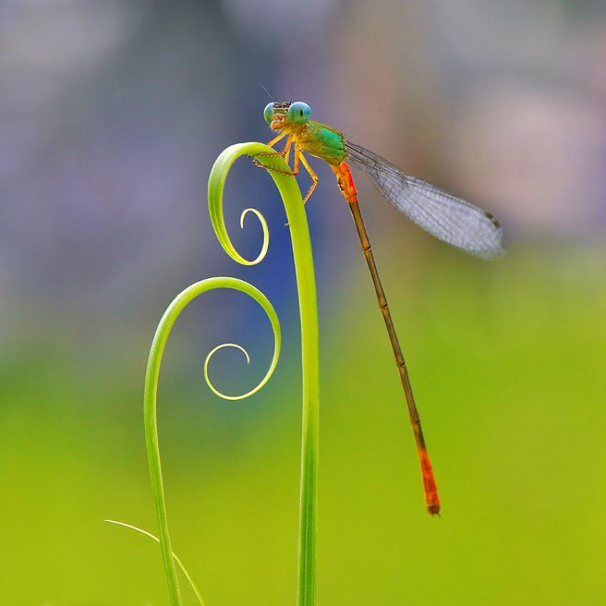 A piece of fine art art photography titled Perch by Nordin Seruyan