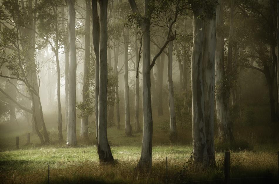 A piece of fine art art photography titled Misty by mandy erskine