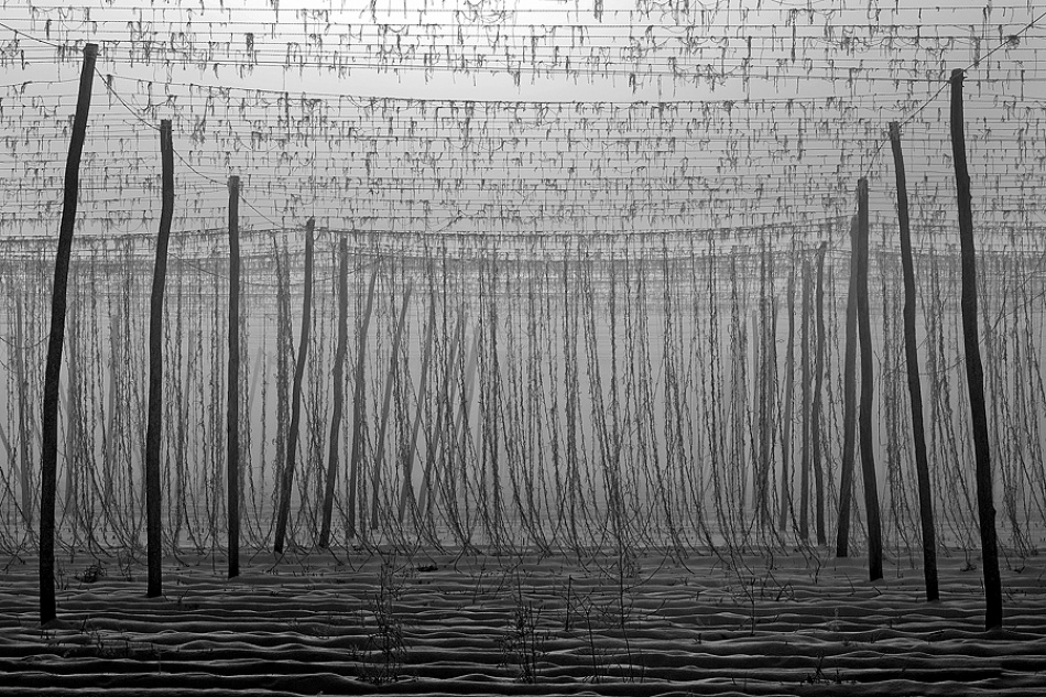 A piece of fine art art photography titled Morning In Lines by Jure Kravanja