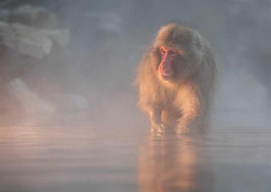 A piece of fine art art photography titled Nature Photographer of the Year by Marsel van Oosten