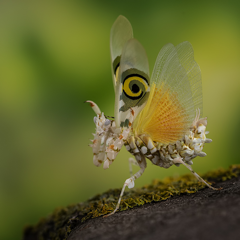 A piece of fine art art photography titled Look at My Wings by Peter Reijners