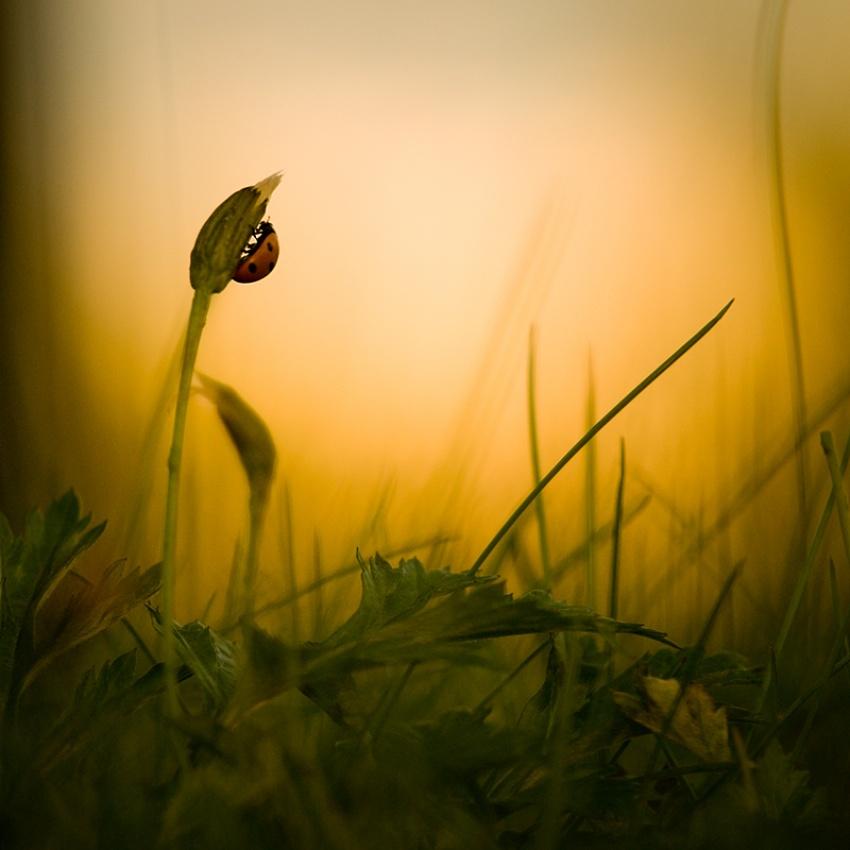 A piece of fine art art photography titled My Little Friend by Mika Sjöman