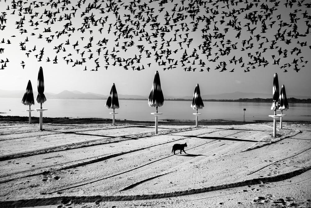 A piece of fine art art photography titled Birds In Flight by Nicodemo Quaglia