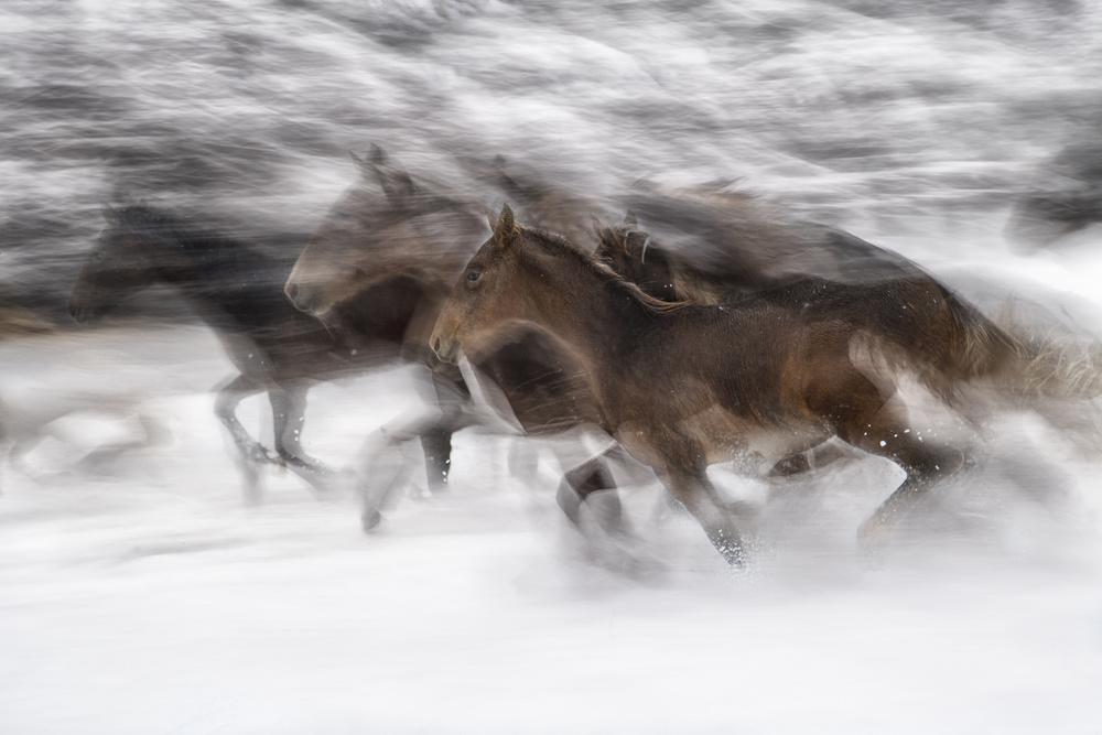 A piece of fine art art photography titled Winter Gallop by milan malovrh