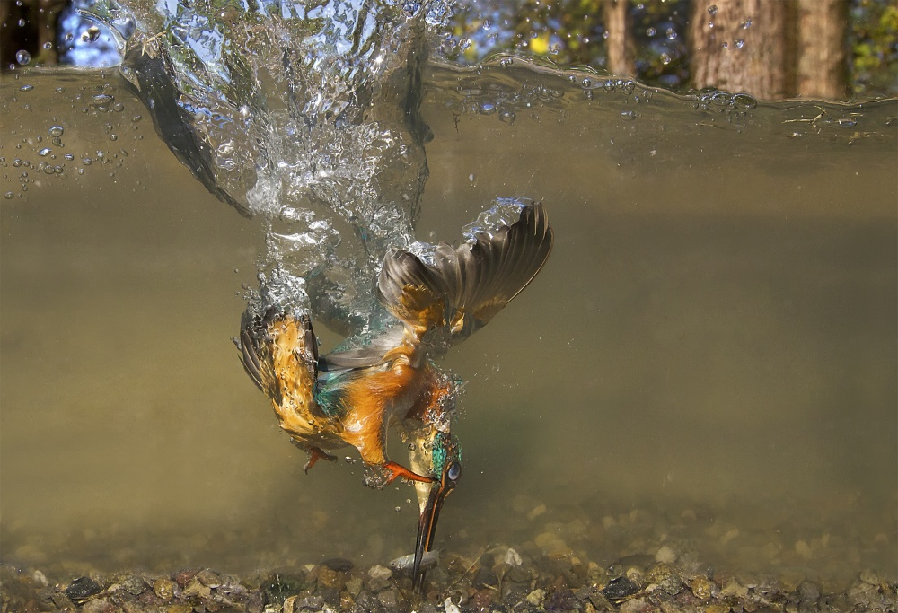 A piece of fine art art photography titled Flying Underwater by Marco Redaelli