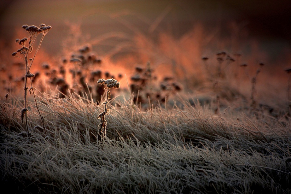 A piece of fine art art photography titled - Frosty Sunrise - by Rosalinde Philippin-Lipscomb