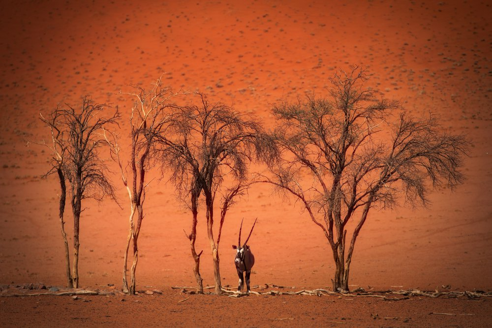 A piece of fine art art photography titled In the Heat of High Noon by Irca Caplikas