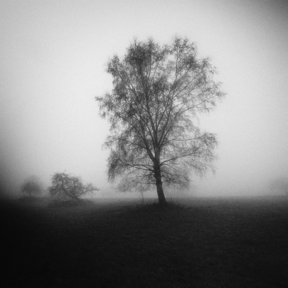 A piece of fine art art photography titled Im Deutschen November by Kaveh Hosseini (Steppenwolf)