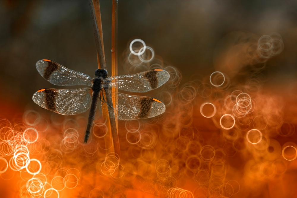 A piece of fine art art photography titled Fenix by Wil Mijer