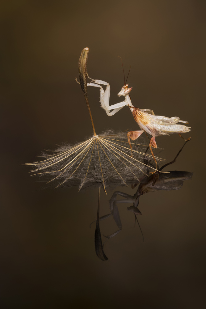 View this piece of fine art photography titled The dance by Henrik Spranz
