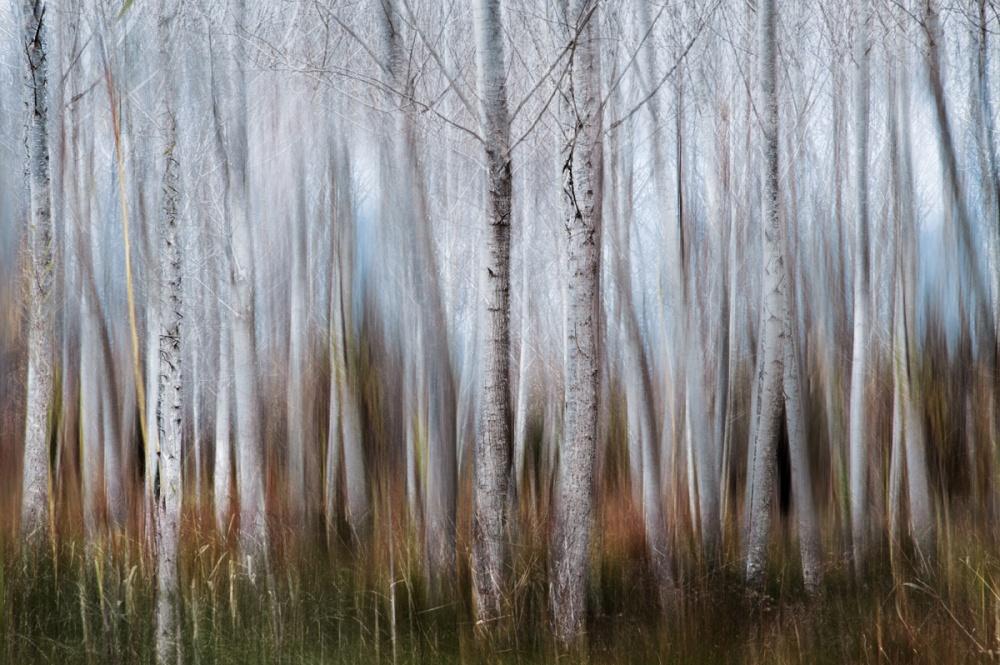 Susurros en el bosque