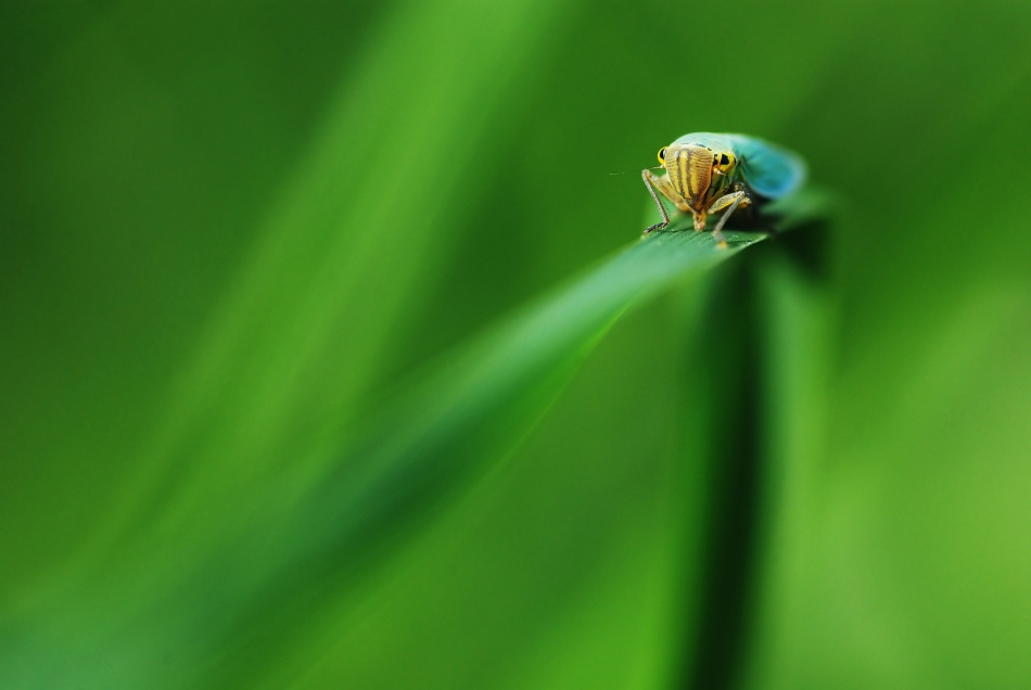 A piece of fine art art photography titled Le Brin D'herbe Plie Mais Ne Romp Pas! by Magik