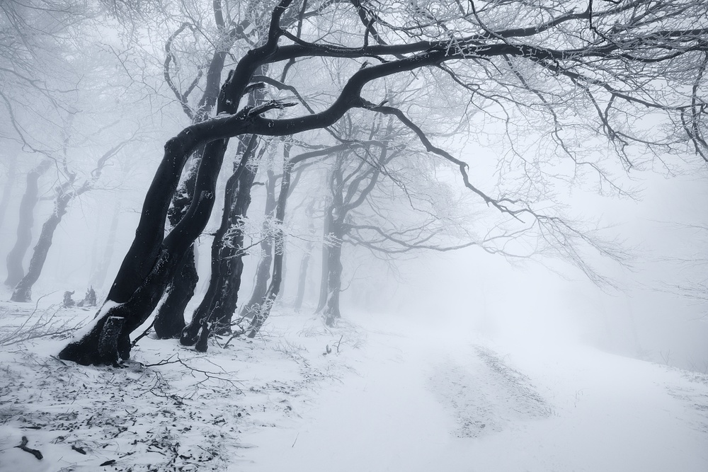 A piece of fine art art photography titled In the Winter Forest by Daniel Řeřicha