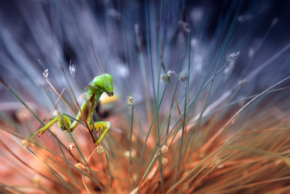 A piece of fine art art photography titled In the Grass by Nordin Seruyan