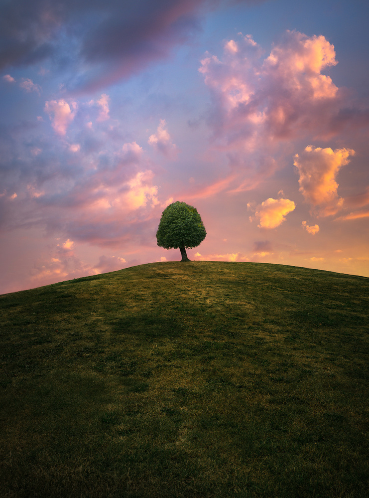 Tree on hill during sunset