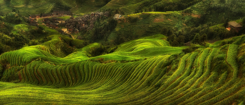 A piece of fine art art photography titled Waves of Rice - the Dragon's Backbone by Max Witjes