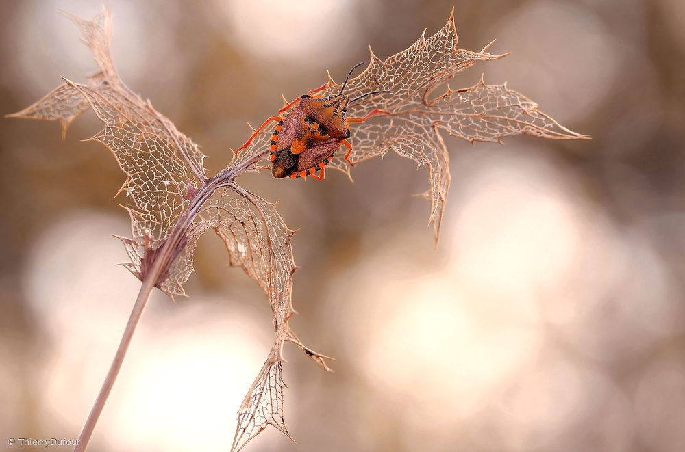 View this piece of fine art photography titled Lacemaker... by Jimmy Hoffman