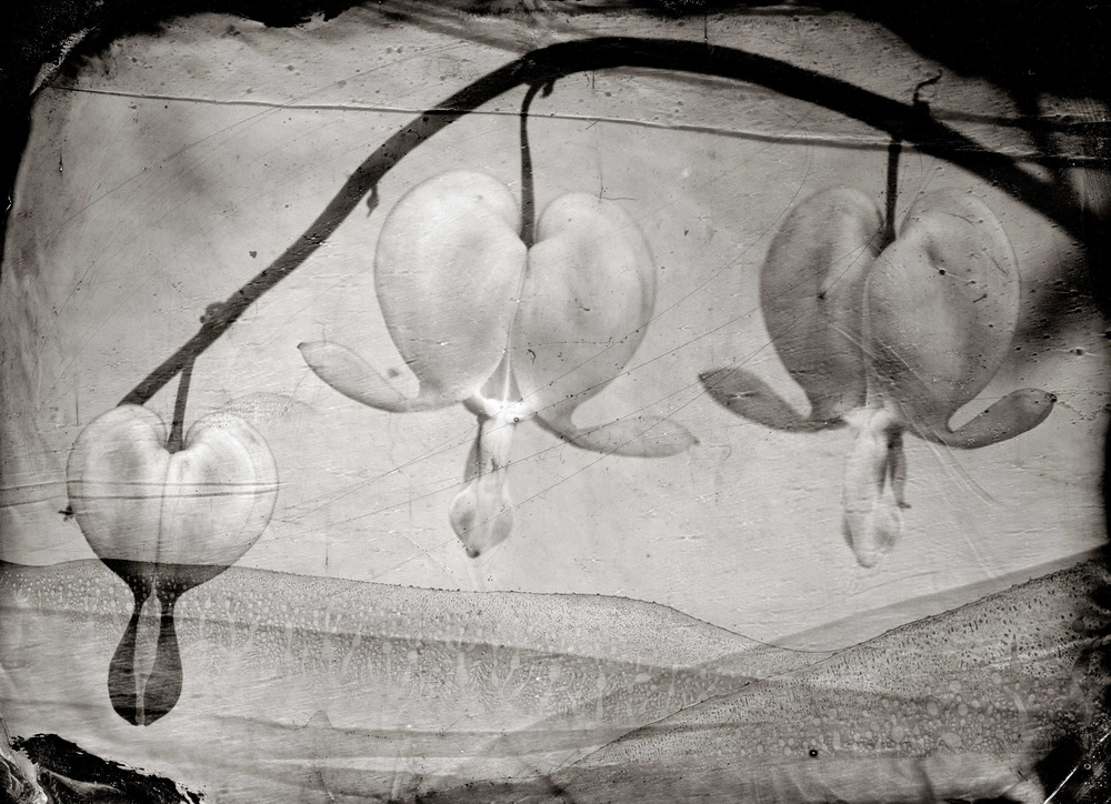 A piece of fine art art photography titled Flying Turtles by Peter van Hal