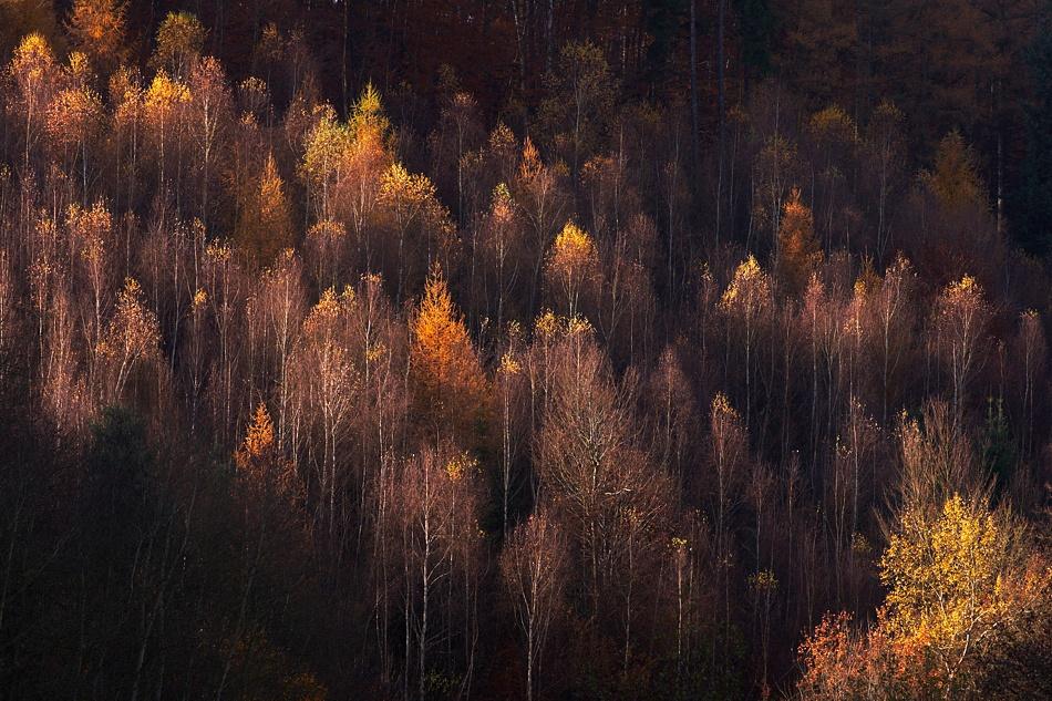 A piece of fine art art photography titled Autumn by Frank Steinmann