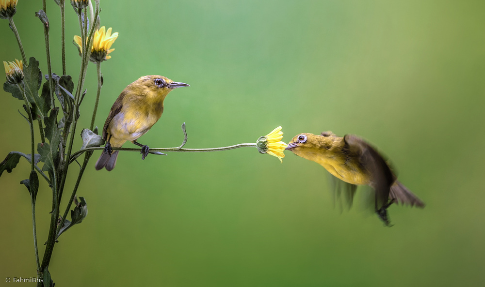 View this piece of fine art photography titled Hovering by Fahmi Bhs
