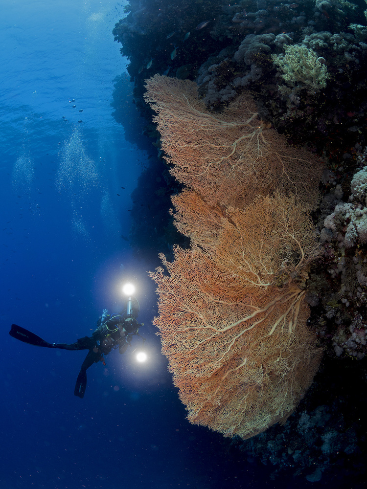A piece of fine art art photography titled Gorgonian Coral and an Underwater Photographer by Ilan Ben Tov