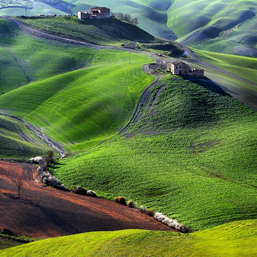 The tuscan green..