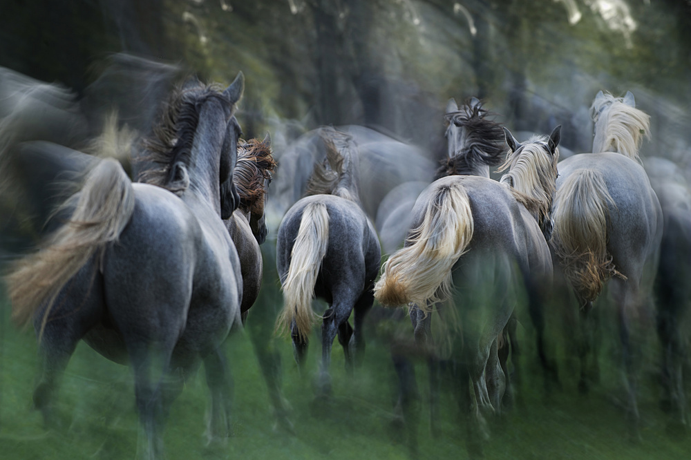 A piece of fine art art photography titled In the Gallop by milan malovrh
