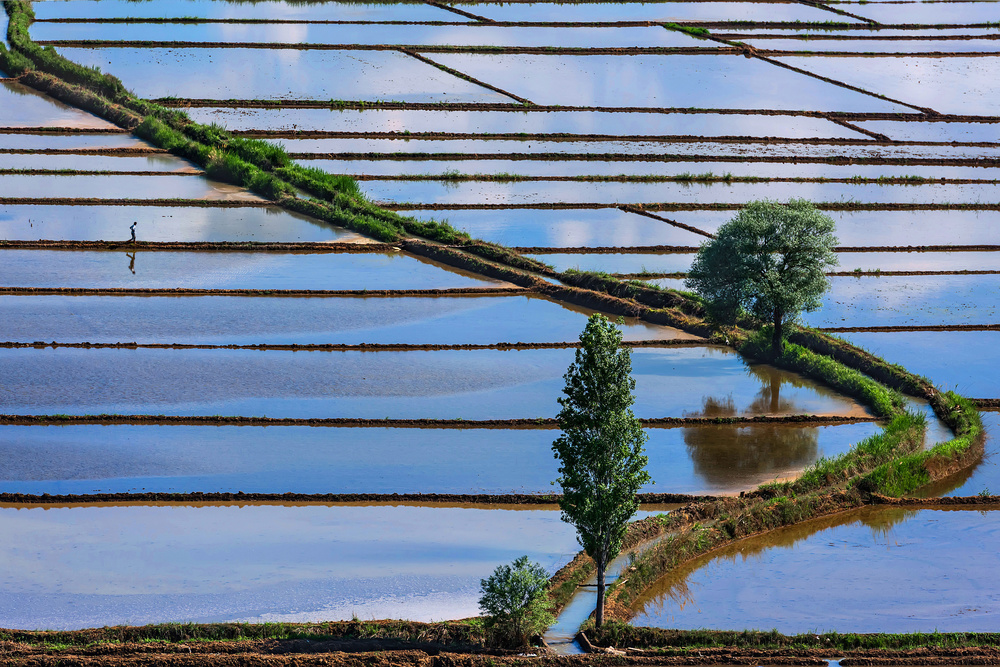 A piece of fine art art photography titled Paddy Fields by F. Dilek Uyar