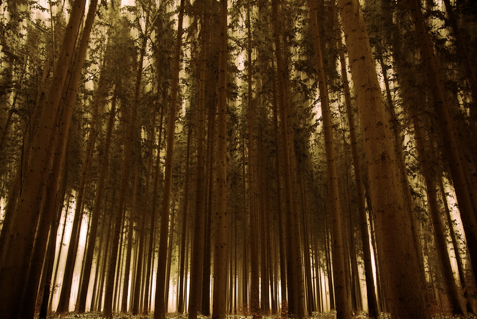 A piece of fine art art photography titled Welcome to Barcode Forest by olmezz