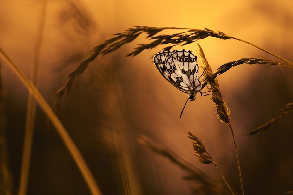 A piece of fine art art photography titled When All Dreams Come True by Fabien BRAVIN