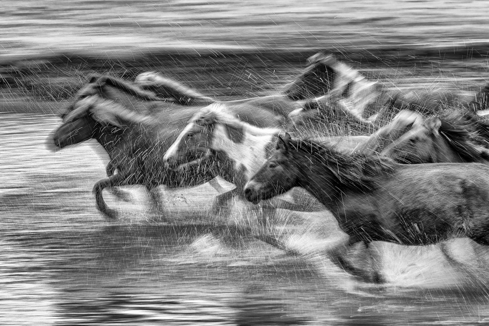 A piece of fine art art photography titled Mongolia Horses by Libby Zhang