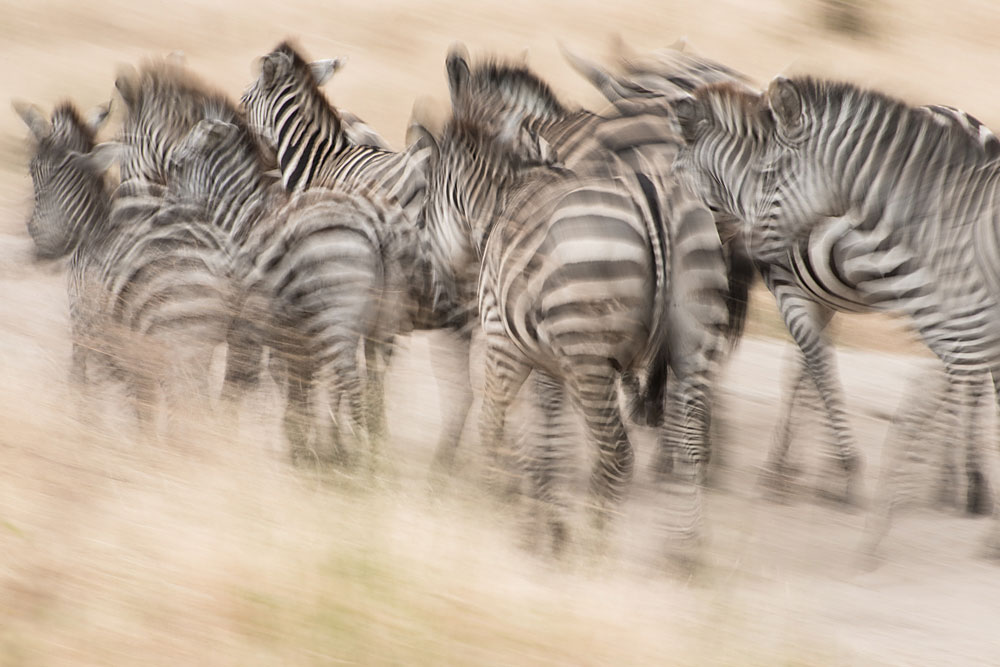 A piece of fine art art photography titled Stampede by IngridVekemans