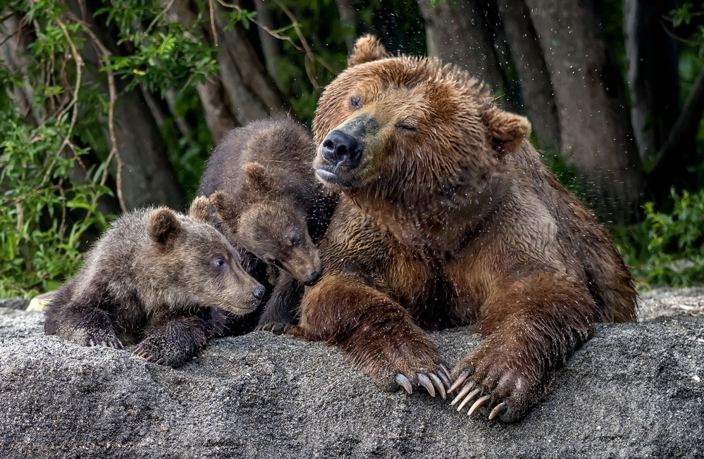 Mother's bear shaking